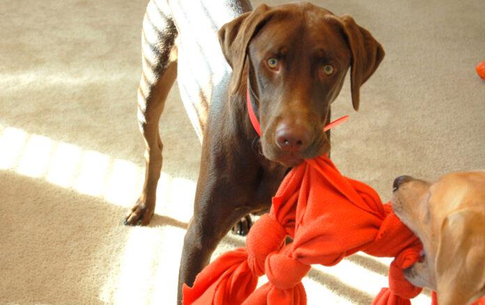 cane ruba gli oggetti e scappa