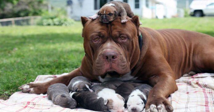 i cuccioli sentono la mancanza della mamma