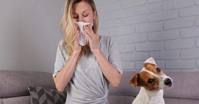 cane con una persona che starnutisce