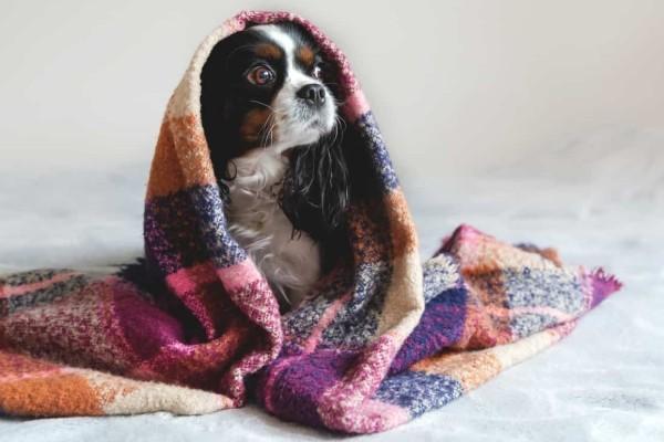 I cani si spaventano degli starnuti?