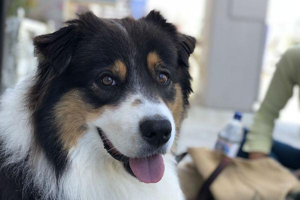 Come si può capire se il cane è sordo?