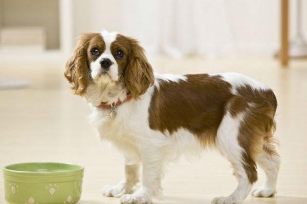 parassita perdita di peso del cane