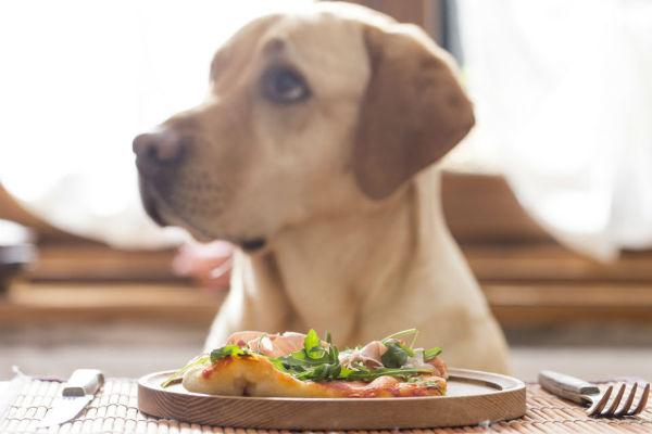 Cause di perdita di peso del cane: le più comuni