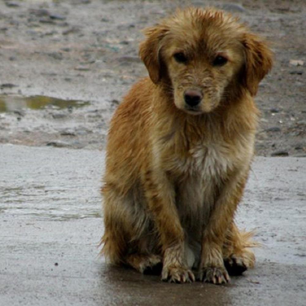 cile-cani-strada