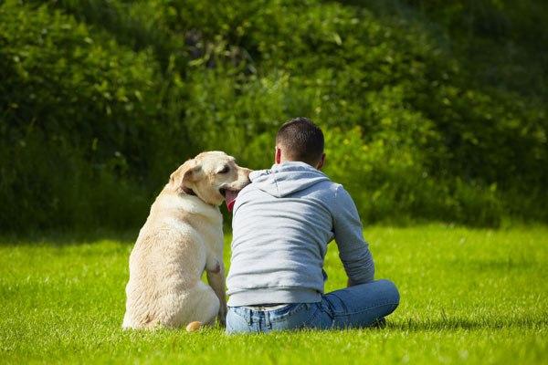 I cani possono fingere di avere paura? E perché?