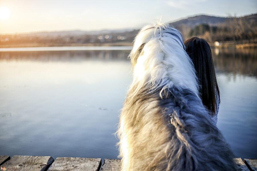 cane e ragazza al lago