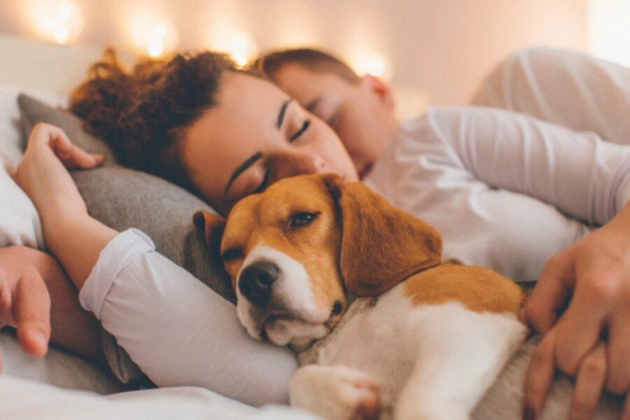 cane a letto con mamma e papà umani