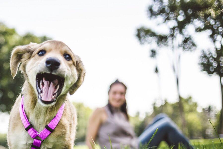 cucciolo di cane giocherellone