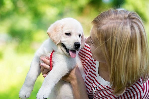 Corsi di addestramento per cuccioli: cosa bisogna aspettarsi