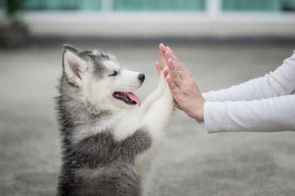 Abbiamo pensato ad una vita senza Fido in giro per casa. Che visione terribile! Ma lui cosa pensa? I cani sopravviverebbero senza gli umani?