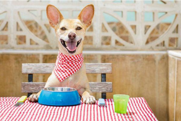 Dare la frutta al cane: 11 buone ragioni da conoscere