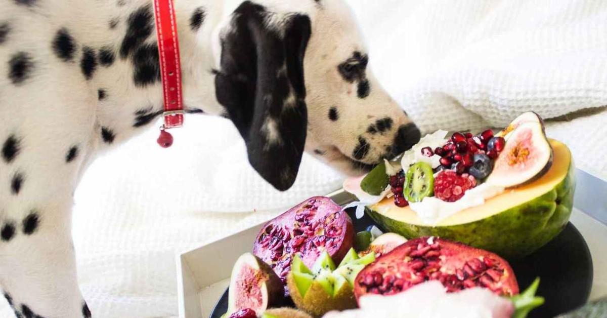 cane che mangia la frutta