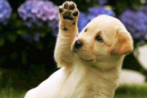 Desquamazione delle zampe del cane: cos'è, come affrontarla