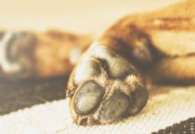 cucciolo di cane con zampe storte