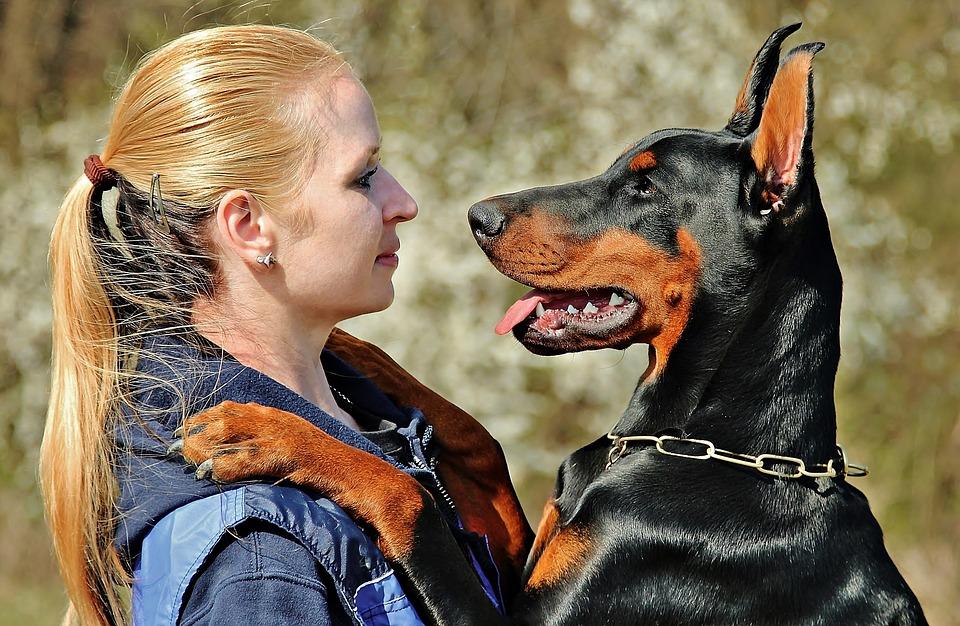 Cane di segno gemelli: caratteristiche, temperamento