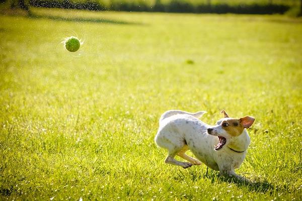 giochi sani per il cane