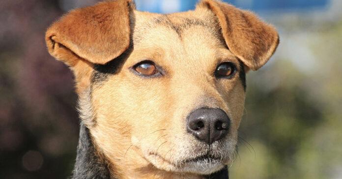 I cani capiscono se sorridiamo? E gli piace?