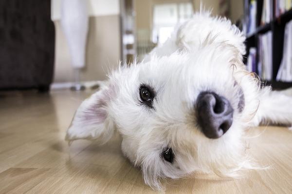 Come evitare che il cane scivoli