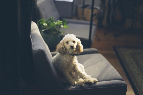 I cani possono capire cosa sta succedendo in televisione?