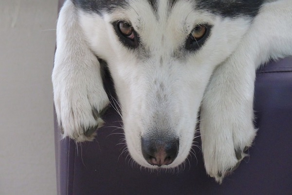 Crescita dei baffi del cane: quando e quanto tempo ci vuole?