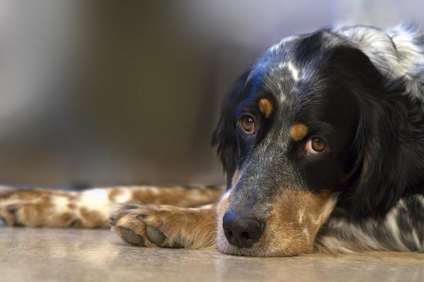I cani preferiscono cibo o coccole, per essere premiati?