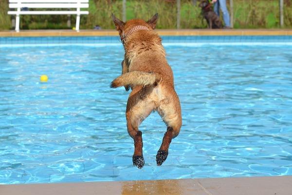 Cani vs Gatti: chi salta più in alto?