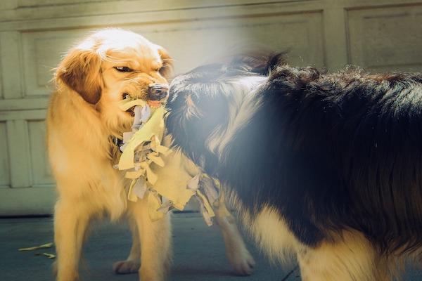Ringhio del cane: quanti tipi ce ne sono? Cosa significano?
