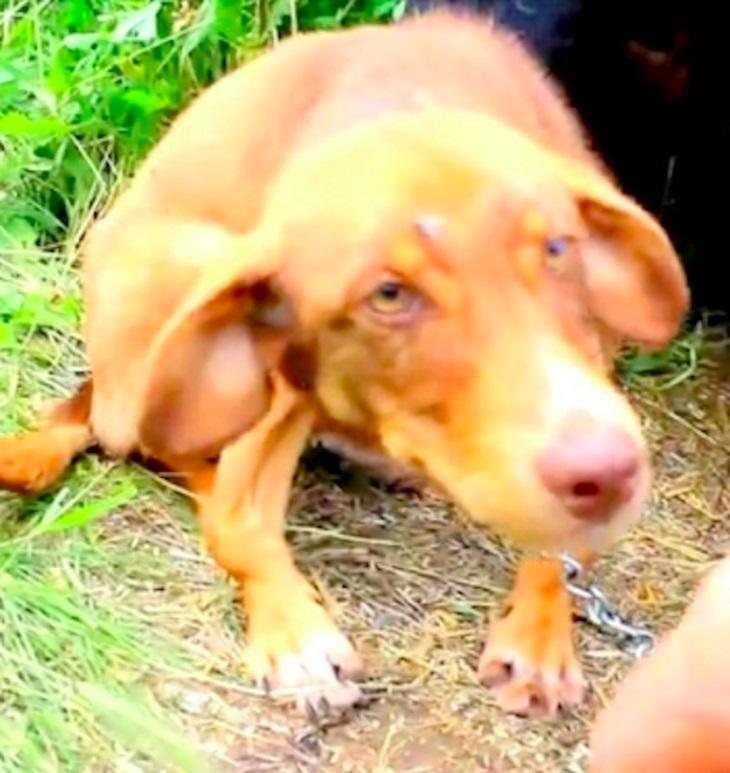 Cane incatenato ad un camion per 10 giorni viene salvato