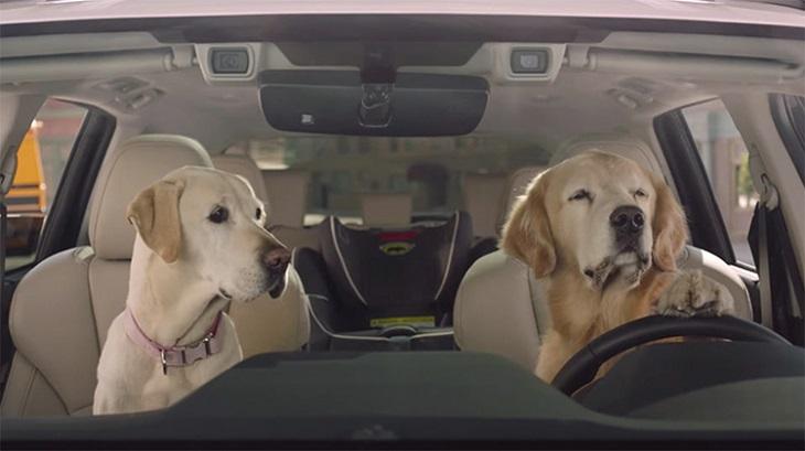 duke-cani-in-auto