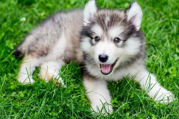 cane con bocca aperta