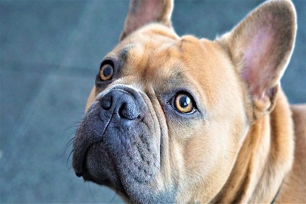 5 ragioni per cui il cane ti ama senza remore