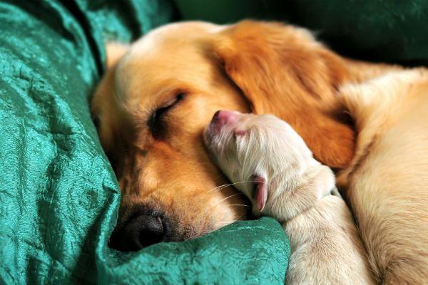 mamma e cucciolo di cane