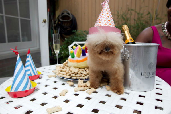 compleanno cane
