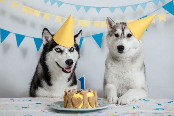 cani che festeggiano