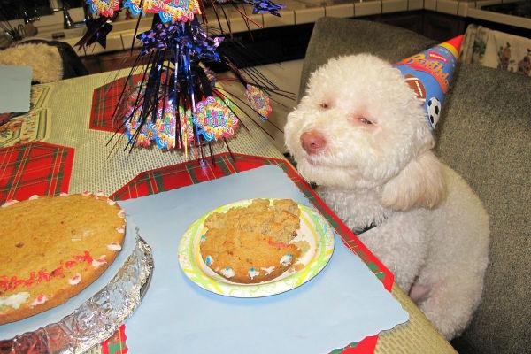torta del cane