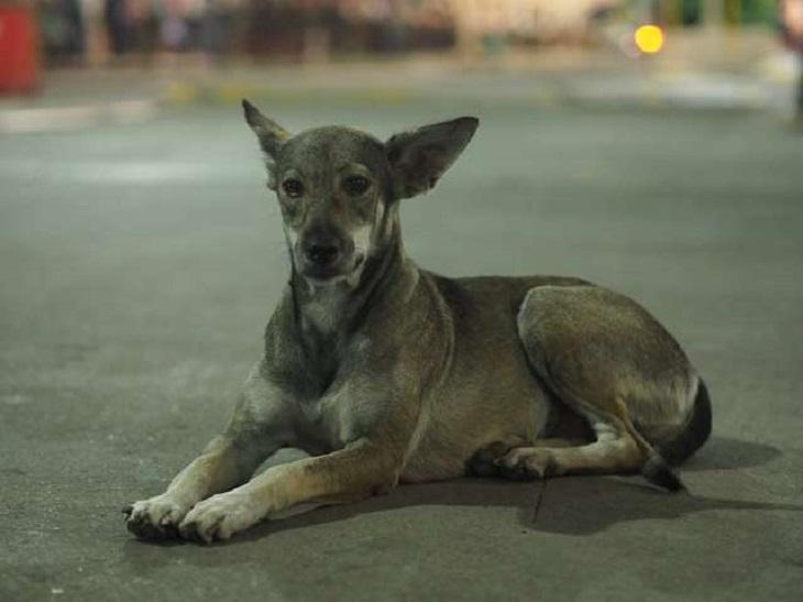 franci-cane