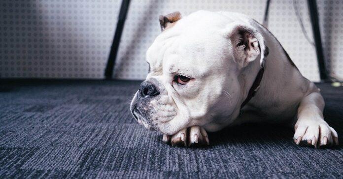 aggressività possessiva del cane, evidenza