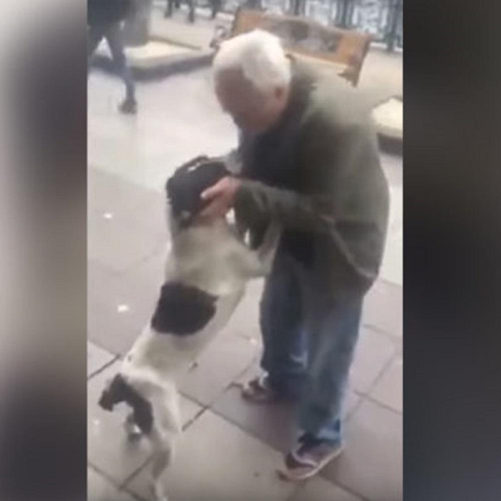 Cane disperso ritrovato dall'anziano proprietario dopo 3 anni