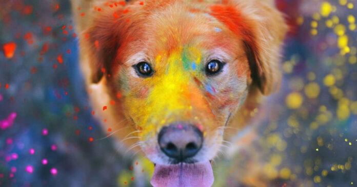 cane e colori