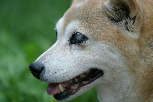 Giochi e accessori per cani ciechi: quali sono?