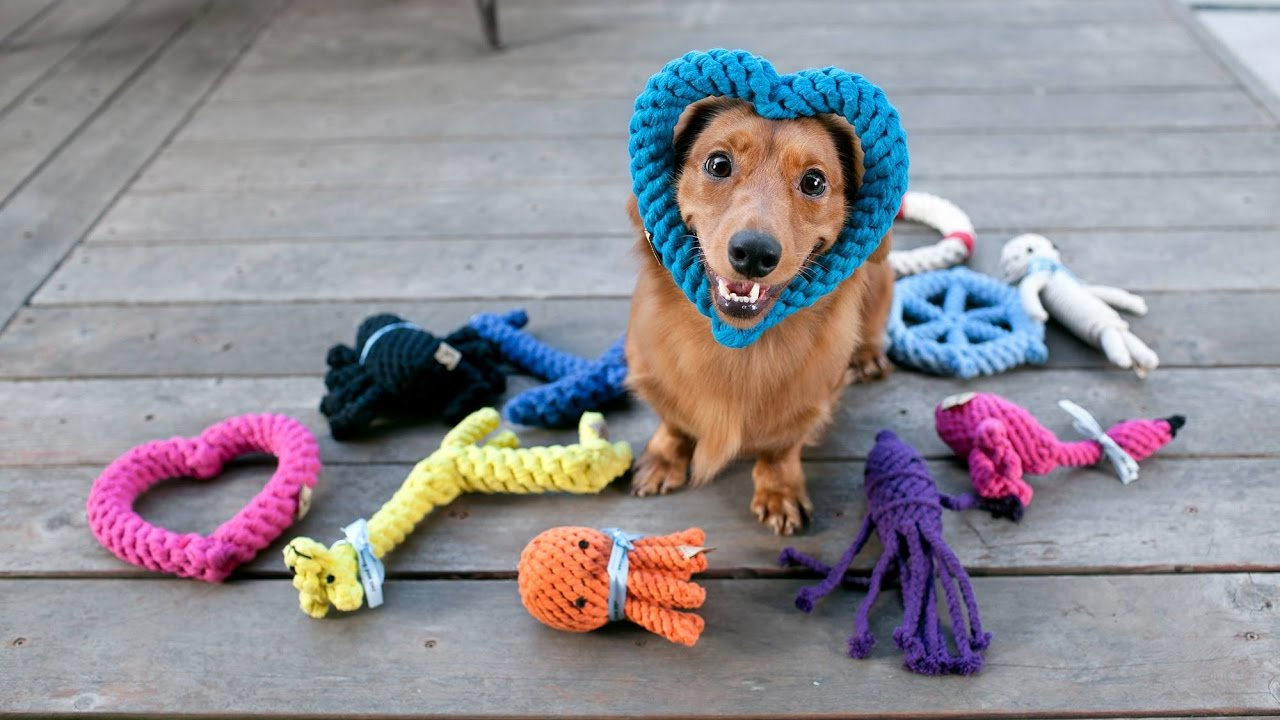 cane e giochi