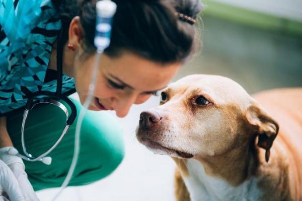 Sterilità nel cane femmina: che cosa c'è da sapere?