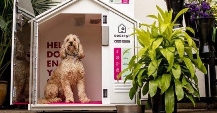 i-cani-non-possono-entrare-nei-negozi-di-alimentari-ecco-la-soluzione
