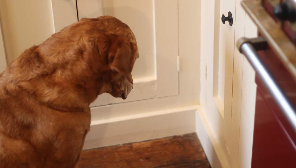 cane fissa la parete