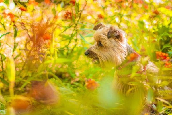Il cane ha mangiato una pianta succulenta, che succede?