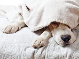 è possibile che il cane non dorma perché è nervoso?