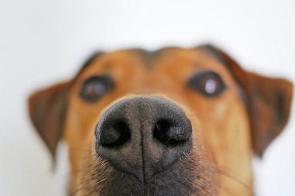 Perché il cane odora le ascelle e non vuole smettere?