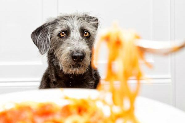 Il cane può mangiare i sughi pronti o gli fanno male?