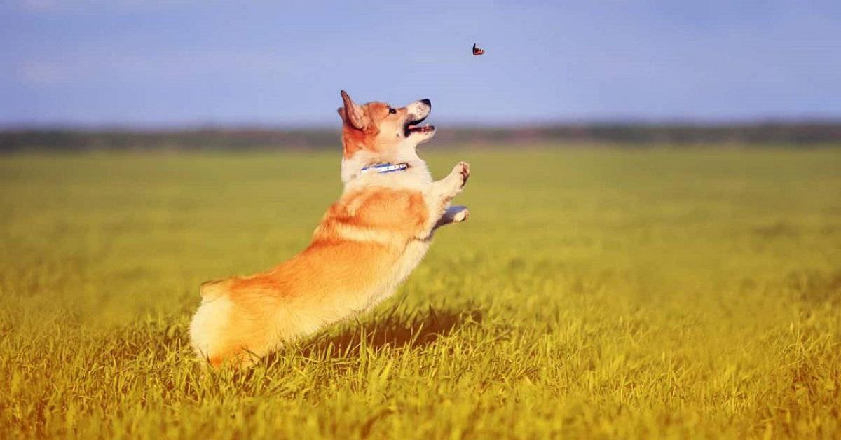 Il cane può mangiare gli insetti? E quali?