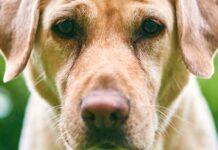 Bocca del cane: cosa ci comunica e come?